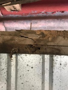 termite physical damage